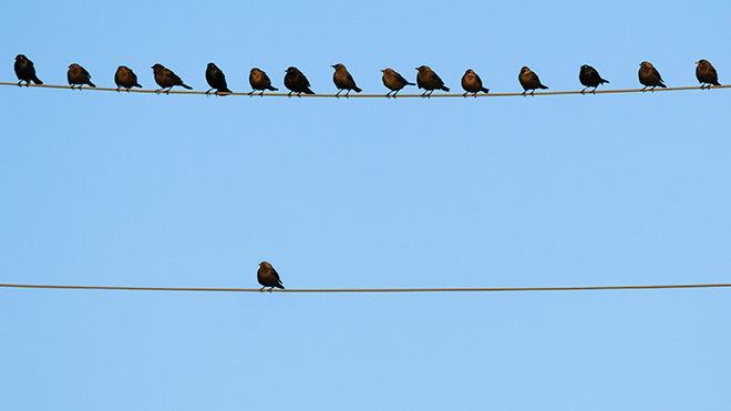 billy no mates - lonely bird on a wire